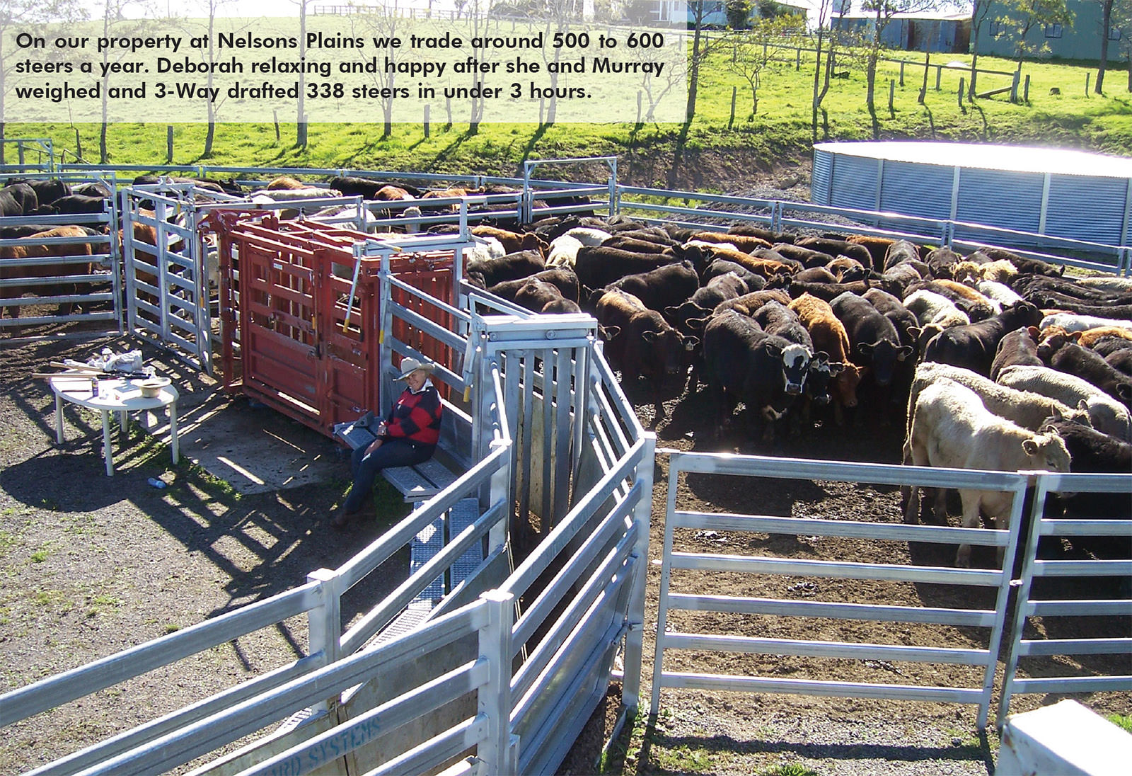 On our property at Nelsons Plains we trade around 500 to 600 steers a year. Deborah relaxing and happy after she and Murray weighed and 3-Way drafted 338 steers in under 3 hours.