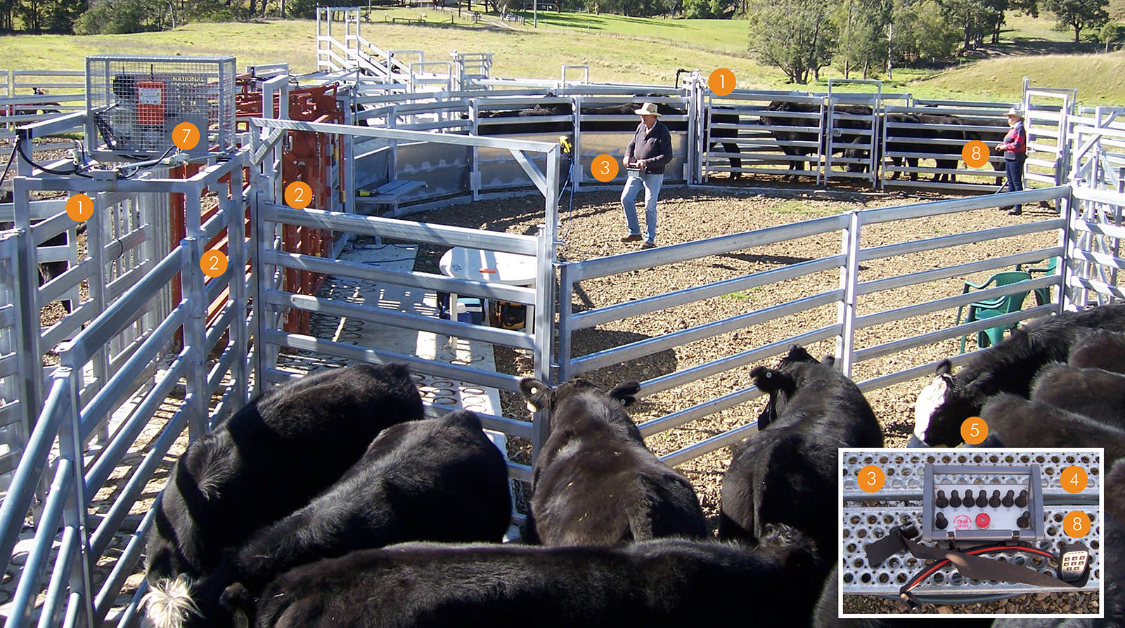 Remote Control Air Operated Cattle Processing Draft & Yard System