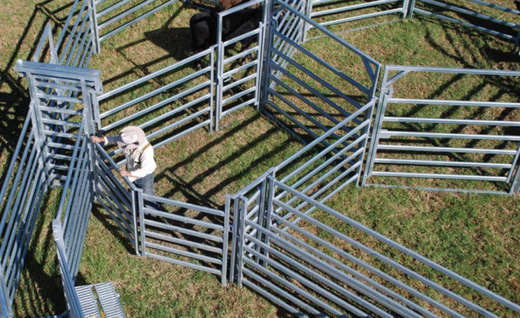 Calf Race and Calf Force